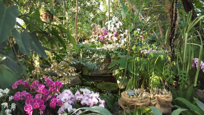 Le 16ème fête l\'orchidée aux Serres d\'Auteuil – CENTURY 21 Via ...